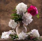 牡丹美丽的花束  免版税库存照片