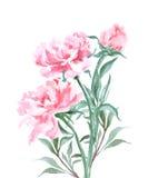 牡丹花束,水彩,可以使用当贺卡,婚姻的,生日传染媒介邀请卡片 向量例证