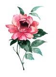 牡丹花的墨水例证 Sumi-e样式 免版税库存照片