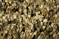 牡蛎养殖场 库存图片