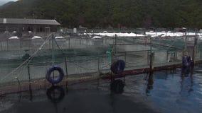 牡蛎农厂在新西兰的海岸背景的技术产业  股票视频