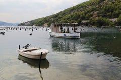 牡蛎农场在克罗地亚 免版税库存照片