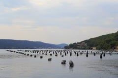 牡蛎农场在克罗地亚 图库摄影