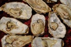 牡蛎未加工的被认可的红色背景 库存照片