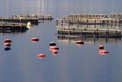 牡蛎生产 免版税库存图片