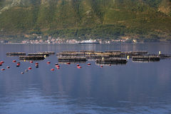 牡蛎生产 库存照片