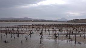 牡蛎种田和牡蛎陷井,浮动滤网袋子Carrickfinn在多尼戈尔郡,爱尔兰 股票录像