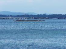 牡蛎种田的平台 库存照片
