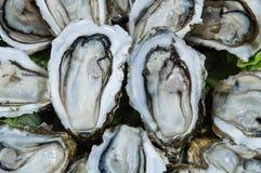 牡蛎背景 库存照片