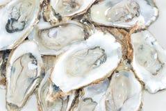 牡蛎 免版税库存图片