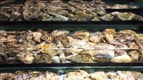 牡蛎 股票视频