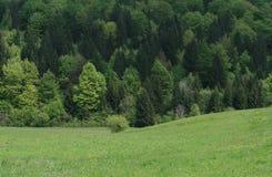 牧人域的森林 图库摄影