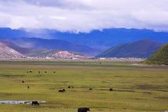牧人风景 库存图片