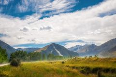 牧人高山风景在新西兰 图库摄影