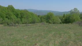 牧场地、森林、小山和天空摇摄运动 影视素材