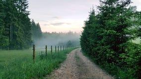 牧场地和年轻冷杉之间的森林道路 库存照片