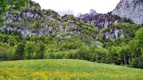 牧场地和草甸在Churfirsten山脉和湖瓦伦湖之间 库存图片