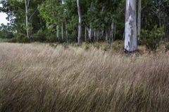 牧场地在森林里 免版税库存照片