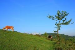 牧场地夏天 库存图片