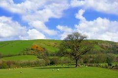牧场地春天 库存图片