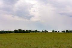 牧场地背景有牛的在距离 库存图片