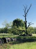 绿色牧场地 库存图片