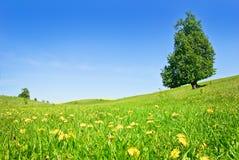牧场地,树,油菜在蓝天的背景播种 库存照片