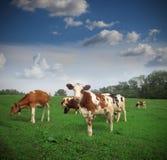 牧场地 库存图片