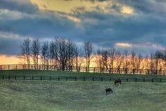 牧场地 库存照片