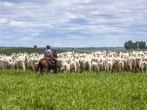 牧畜者 免版税库存照片