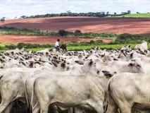 牧畜者 库存照片