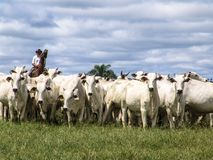 牧畜者 免版税库存图片