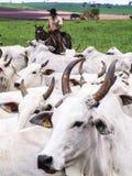 牧畜者 免版税图库摄影