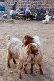 牧羊人和人们是在牲畜市场上 图库摄影