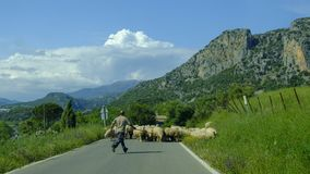 牧羊人和绵羊在格拉萨莱马,西班牙山  免版税库存图片