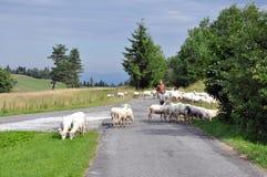 牧羊人和绵羊在山 库存照片