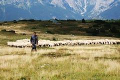 牧羊人在莫尔韦诺 库存图片