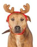 牧羊人杂种狗圣诞节驯鹿 免版税库存照片