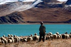 牧羊人西藏 免版税图库摄影