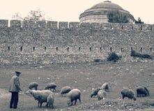 牧羊人驾驶他的绵羊 库存图片
