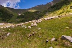 牧羊人 免版税图库摄影