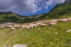 牧羊人 免版税库存照片