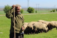 牧羊人 库存图片