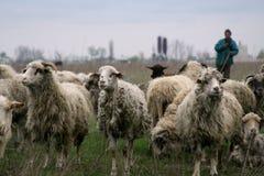 牧羊人 图库摄影