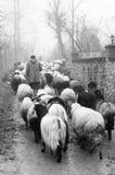 牧羊人 免版税库存图片