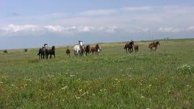 牧群和干草原 股票视频