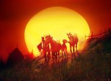 牧群火焰 免版税库存图片
