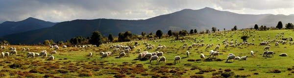 从牧群的全景图片在山 库存图片