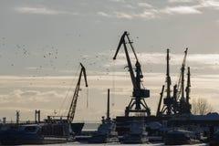 货物运输工业风景-海口晴天-起重机在港口,剪影 免版税库存图片