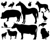 牲口 免版税库存照片